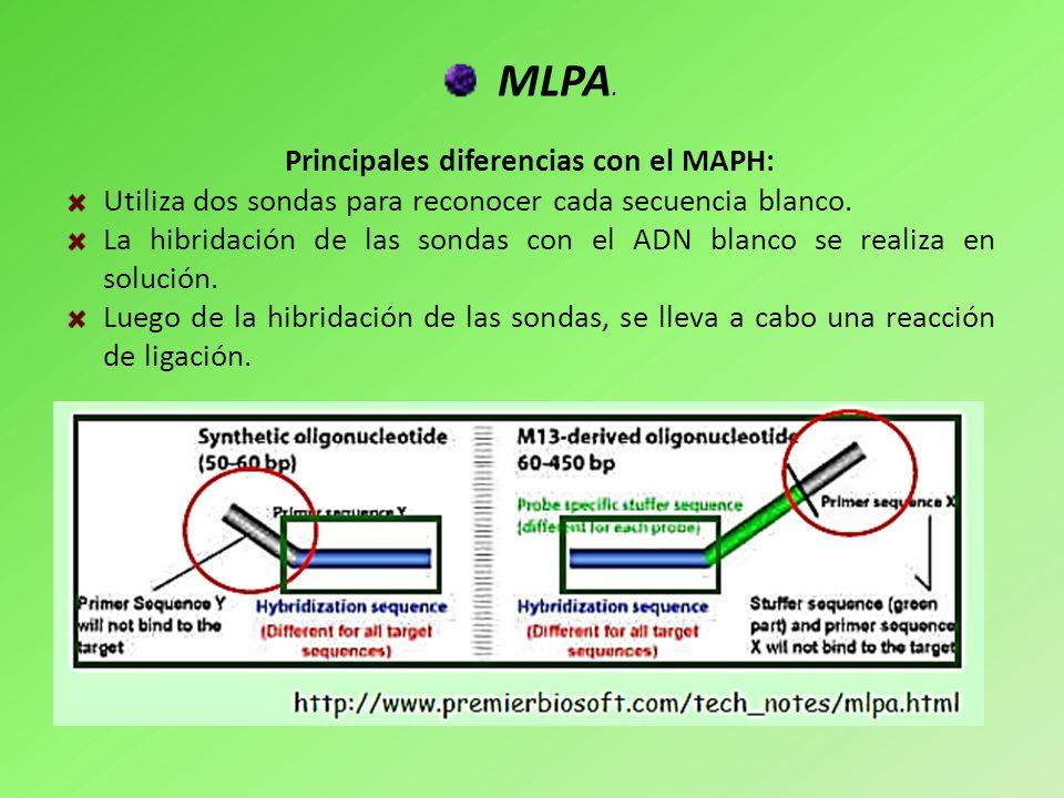 MLPA. Principales diferencias con el MAPH: Utiliza dos sondas para reconocer cada secuencia blanco. La hibridación de las sondas con el ADN blanco se