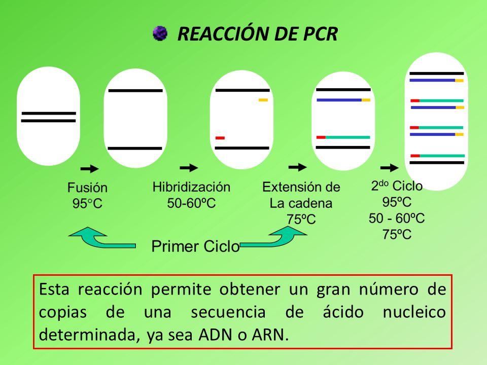 RT-PCR Muestra de partida: ARN.Pasos de reacción: 1)Transcripción reversa para obtención de ADNc.
