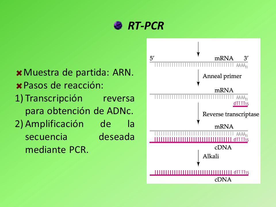 RT-PCR Muestra de partida: ARN. Pasos de reacción: 1)Transcripción reversa para obtención de ADNc. 2)Amplificación de la secuencia deseada mediante PC
