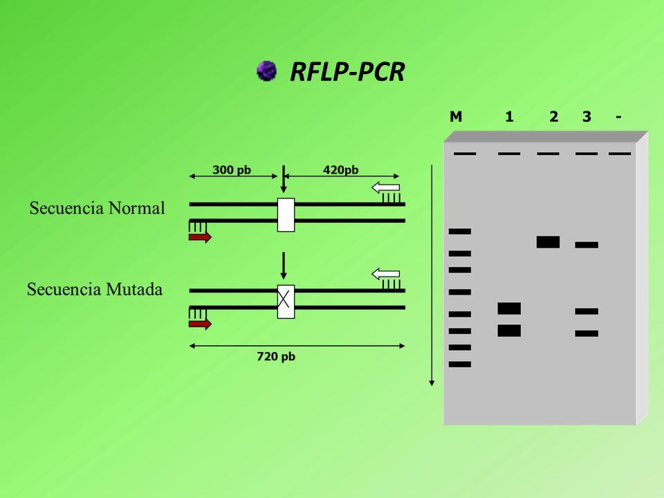 Transferencia Southern Se utiliza para analizar fragmentos de DNA generados por digestión con enzimas de restricción.
