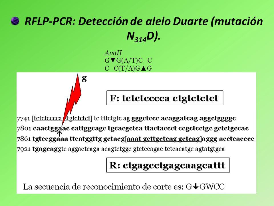 Análisis de la mutación N314D en el exón 10 del gen GALT humano.