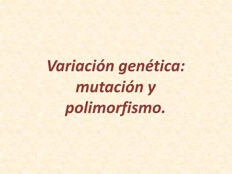 Variación genética: mutación y polimorfismo.