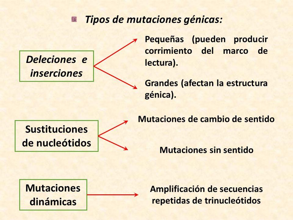 Tipos de mutaciones génicas: Deleciones e inserciones Pequeñas (pueden producir corrimiento del marco de lectura). Grandes (afectan la estructura géni