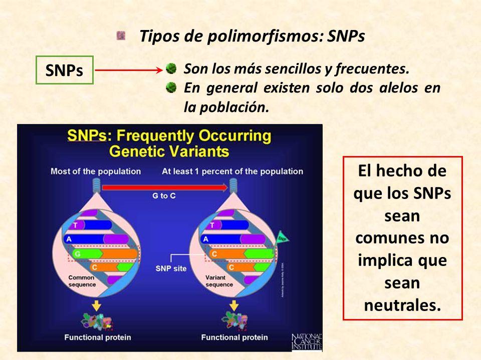 Tipos de polimorfismos: SNPs SNPs Son los más sencillos y frecuentes. En general existen solo dos alelos en la población. El hecho de que los SNPs sea