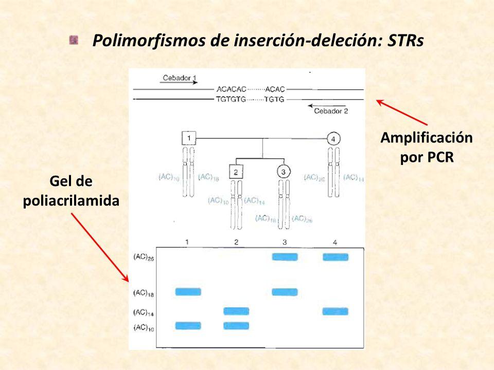Polimorfismos de inserción-deleción: STRs Gel de poliacrilamida Amplificación por PCR