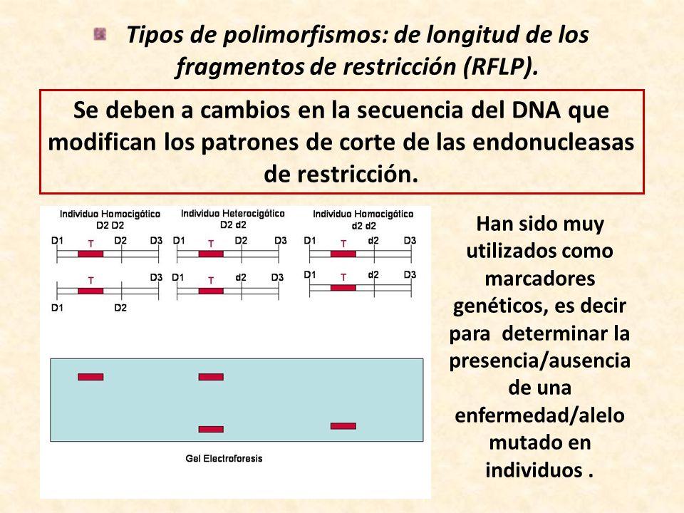 Tipos de polimorfismos: de longitud de los fragmentos de restricción (RFLP). Se deben a cambios en la secuencia del DNA que modifican los patrones de