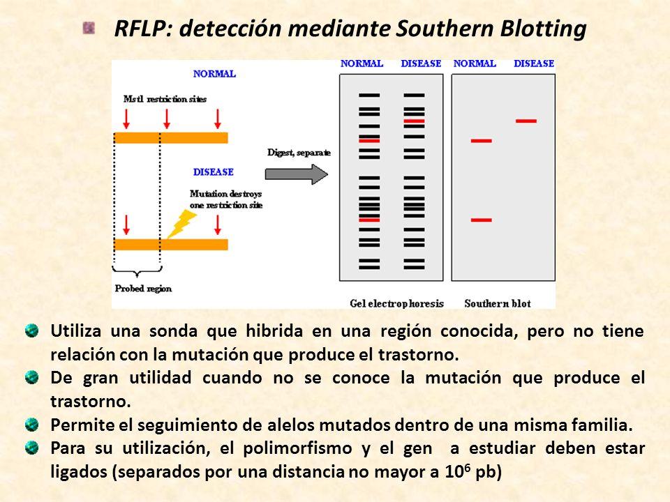 RFLP: detección mediante Southern Blotting Utiliza una sonda que hibrida en una región conocida, pero no tiene relación con la mutación que produce el