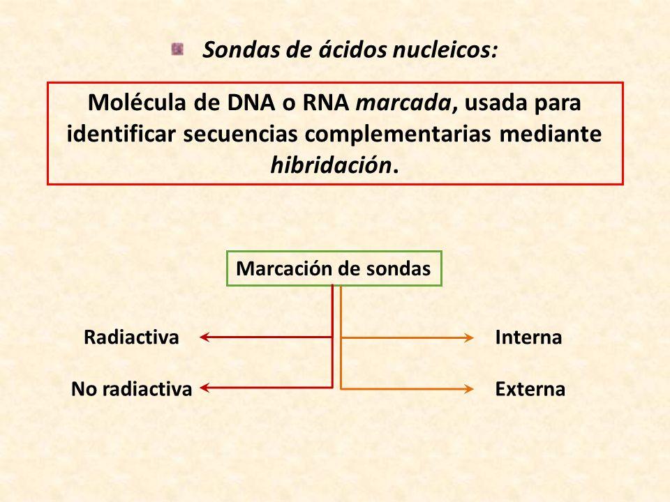 Sondas de ácidos nucleicos: Molécula de DNA o RNA marcada, usada para identificar secuencias complementarias mediante hibridación. Marcación de sondas