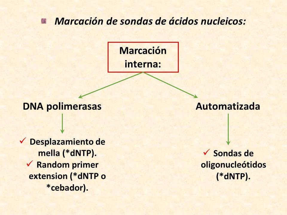 Marcación de sondas de ácidos nucleicos: DNA polimerasas Marcación interna: Desplazamiento de mella (*dNTP). Random primer extension (*dNTP o *cebador