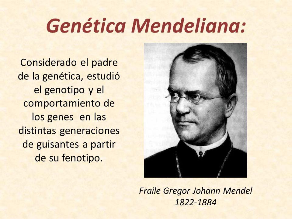 Genética Mendeliana: Fraile Gregor Johann Mendel 1822-1884 Considerado el padre de la genética, estudió el genotipo y el comportamiento de los genes e