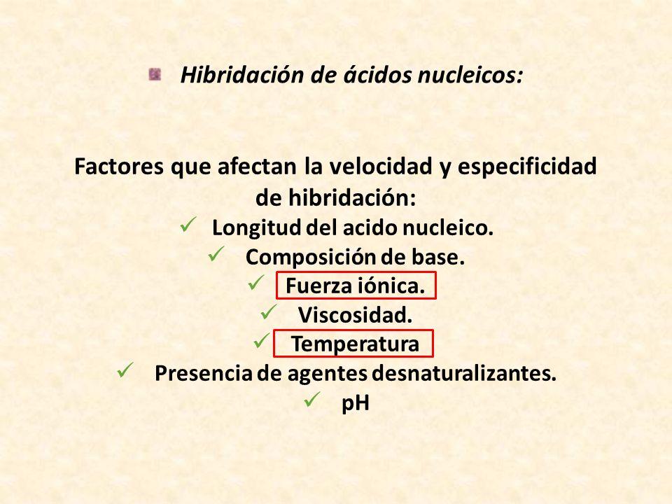 Hibridación de ácidos nucleicos: Factores que afectan la velocidad y especificidad de hibridación: Longitud del acido nucleico. Composición de base. F