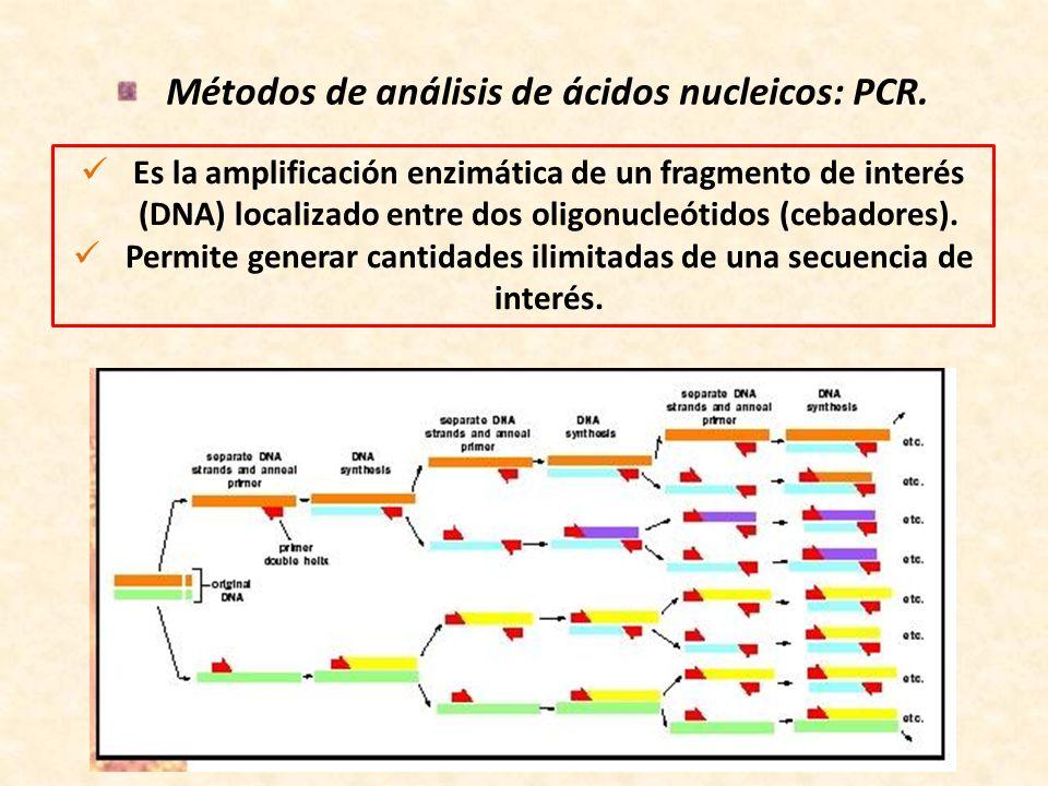 Métodos de análisis de ácidos nucleicos: PCR. Es la amplificación enzimática de un fragmento de interés (DNA) localizado entre dos oligonucleótidos (c