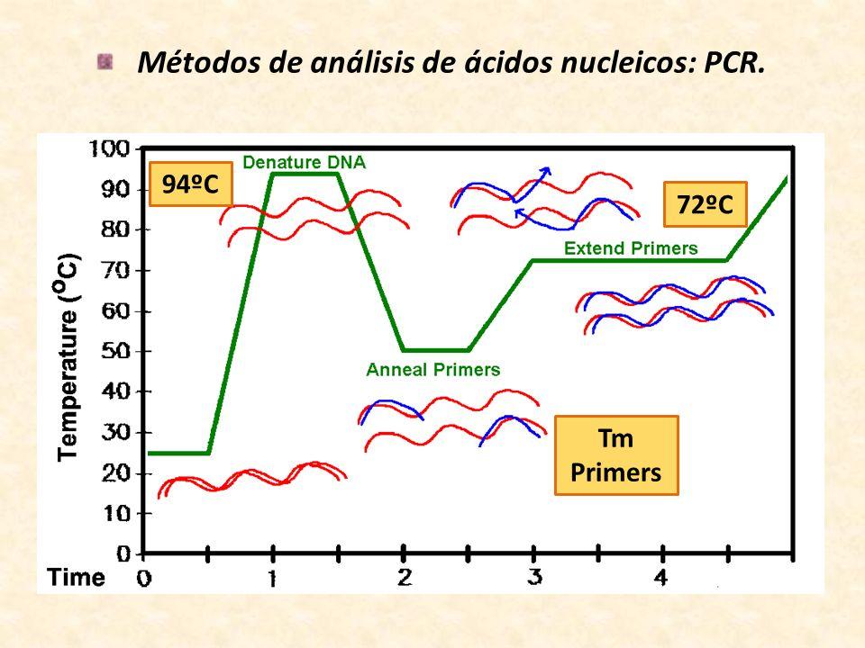 Métodos de análisis de ácidos nucleicos: PCR. 94ºC Tm Primers 72ºC