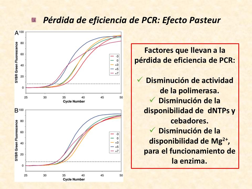 Pérdida de eficiencia de PCR: Efecto Pasteur Factores que llevan a la pérdida de eficiencia de PCR: Disminución de actividad de la polimerasa. Disminu