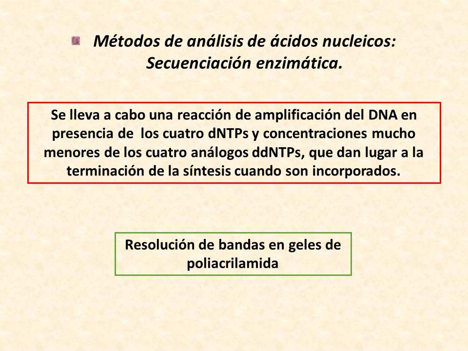 Métodos de análisis de ácidos nucleicos: Secuenciación enzimática. Se lleva a cabo una reacción de amplificación del DNA en presencia de los cuatro dN