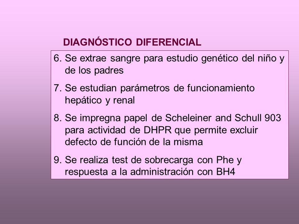 6.Se extrae sangre para estudio genético del niño y de los padres 7.Se estudian parámetros de funcionamiento hepático y renal 8.Se impregna papel de Scheleiner and Schull 903 para actividad de DHPR que permite excluir defecto de función de la misma 9.Se realiza test de sobrecarga con Phe y respuesta a la administración con BH4 DIAGNÓSTICO DIFERENCIAL