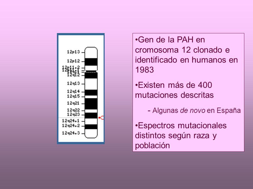 DIAGNÓSTICO PRENATAL Detección de mutaciones del caso índice en vellosidades coriales ó amniocitos DIAGNÓSTICO DE LA EMBRIOPATÍA POR PKU MATERNA Tener presente mientras existan mujeres fértiles no sometidas a sceening Sospechar si abortos de repetición ó embarazo anterior con CIR de origen desconocido, cardiopatía congénita, microcefalia y rasgos dismórficos