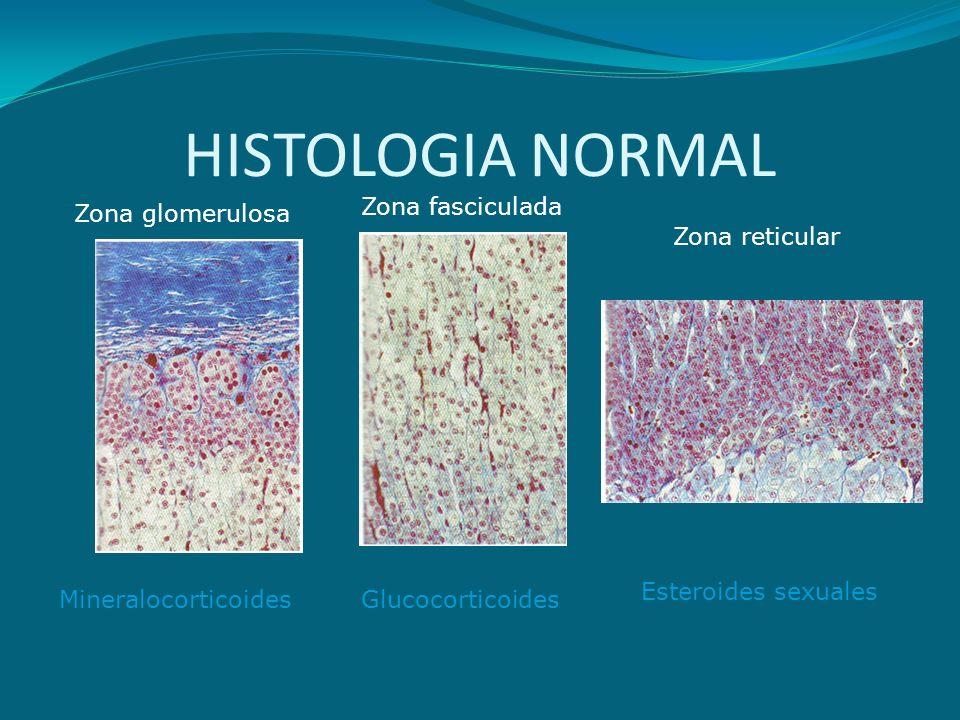 PRODUCCION HORMONAL GLUCOCORTICOIDES