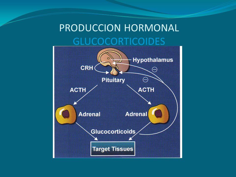 ACCIONES BIOLOGICAS DEL CORTISOL Efecto catabólico en los músculos.