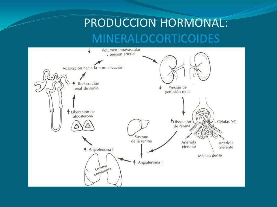 HIPERPLASIA ADRENAL CONGENITA Errores metabólicos heredados: AR.