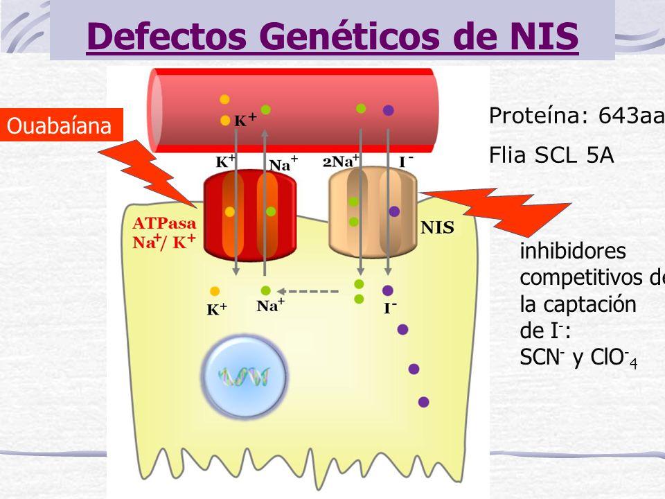 Defectos Genéticos de NIS Proteína: 643aa Flia SCL 5A Ouabaíana inhibidores competitivos de la captación de I - : SCN - y ClO - 4