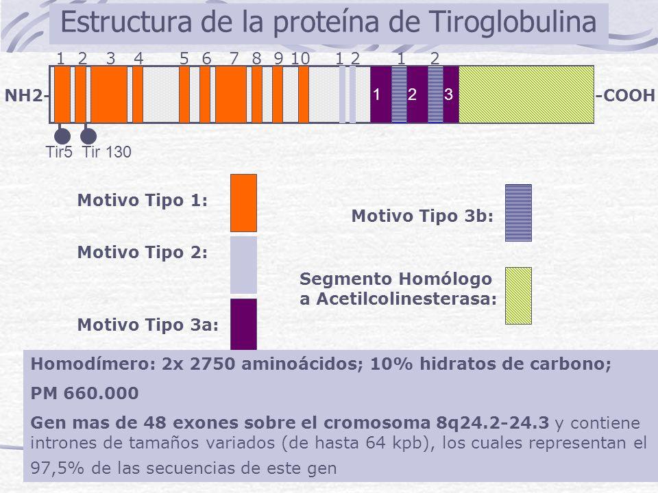 NH2--COOH 1 2 3 4 5 6 7 8 9 10 1 2 1 2 Tir5 Tir 130 Motivo Tipo 1: Motivo Tipo 2: Motivo Tipo 3a: Motivo Tipo 3b: Segmento Homólogo a Acetilcolinester