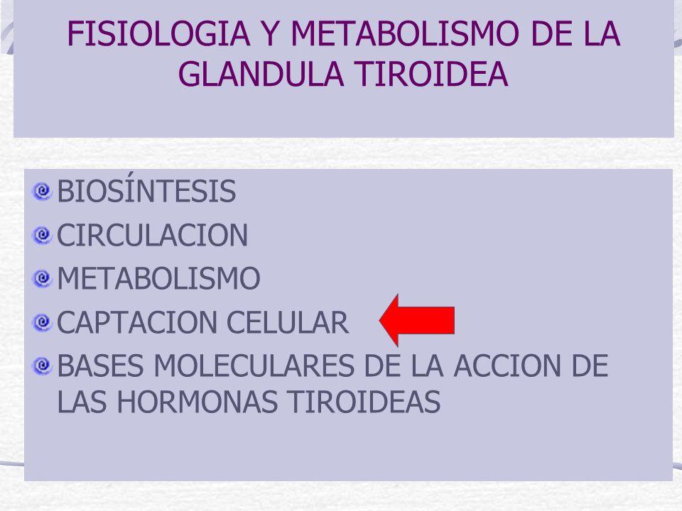 FISIOLOGIA Y METABOLISMO DE LA GLANDULA TIROIDEA BIOSÍNTESIS CIRCULACION METABOLISMO CAPTACION CELULAR BASES MOLECULARES DE LA ACCION DE LAS HORMONAS