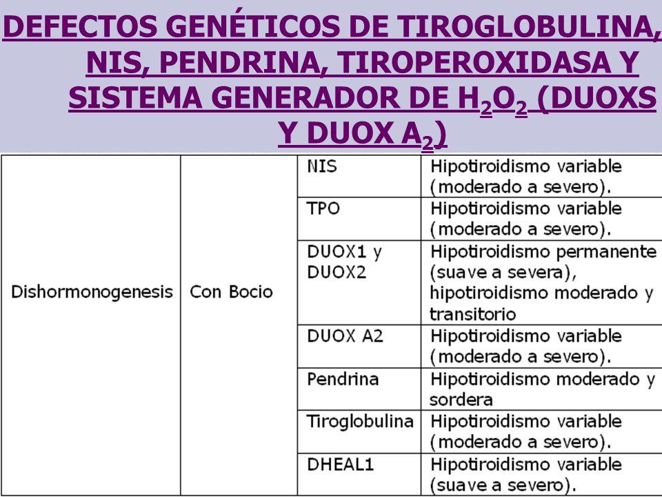 DEFECTOS GENÉTICOS DE TIROGLOBULINA, NIS, PENDRINA, TIROPEROXIDASA Y SISTEMA GENERADOR DE H 2 O 2 (DUOXS Y DUOX A 2 )