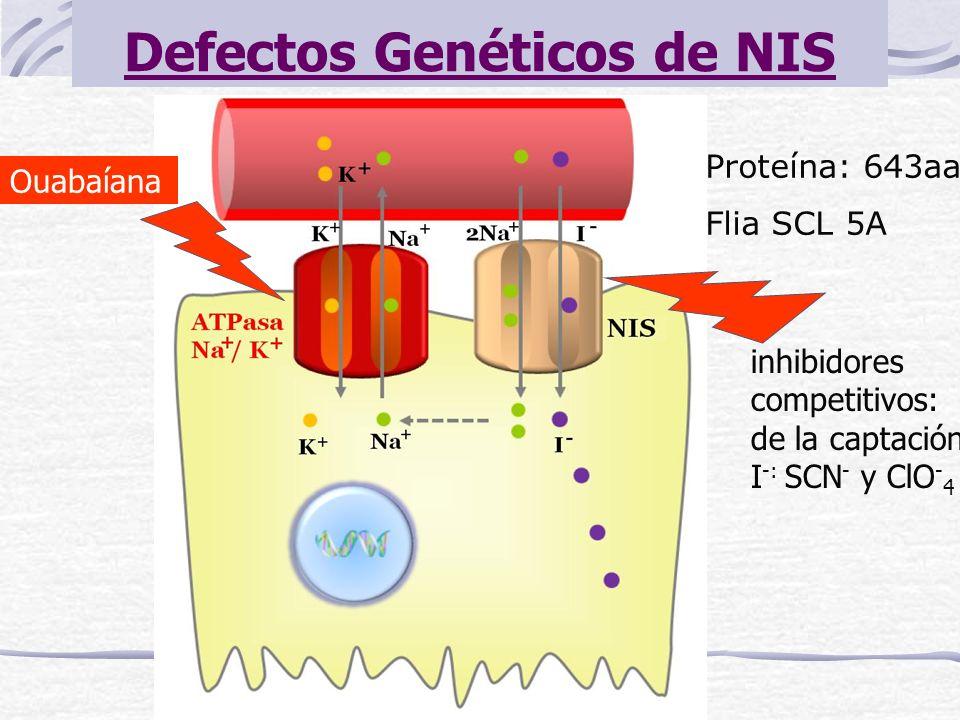 Defectos Genéticos de NIS Proteína: 643aa Flia SCL 5A Ouabaíana inhibidores competitivos: de la captación I -: SCN - y ClO - 4