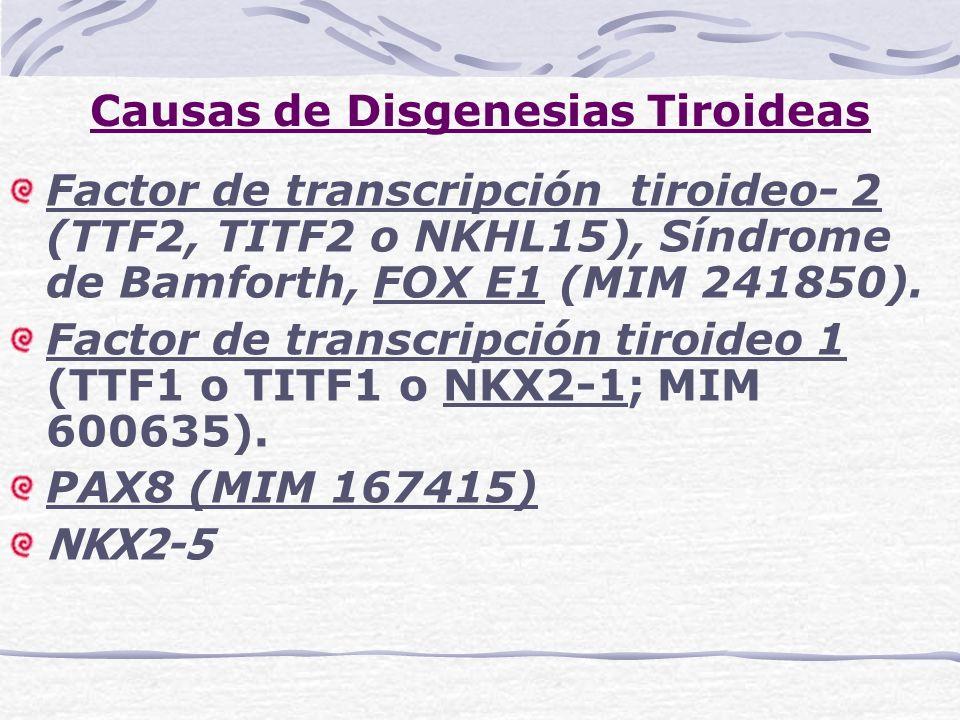 Causas de Disgenesias Tiroideas Factor de transcripción tiroideo- 2 (TTF2, TITF2 o NKHL15), Síndrome de Bamforth, FOX E1 (MIM 241850). Factor de trans