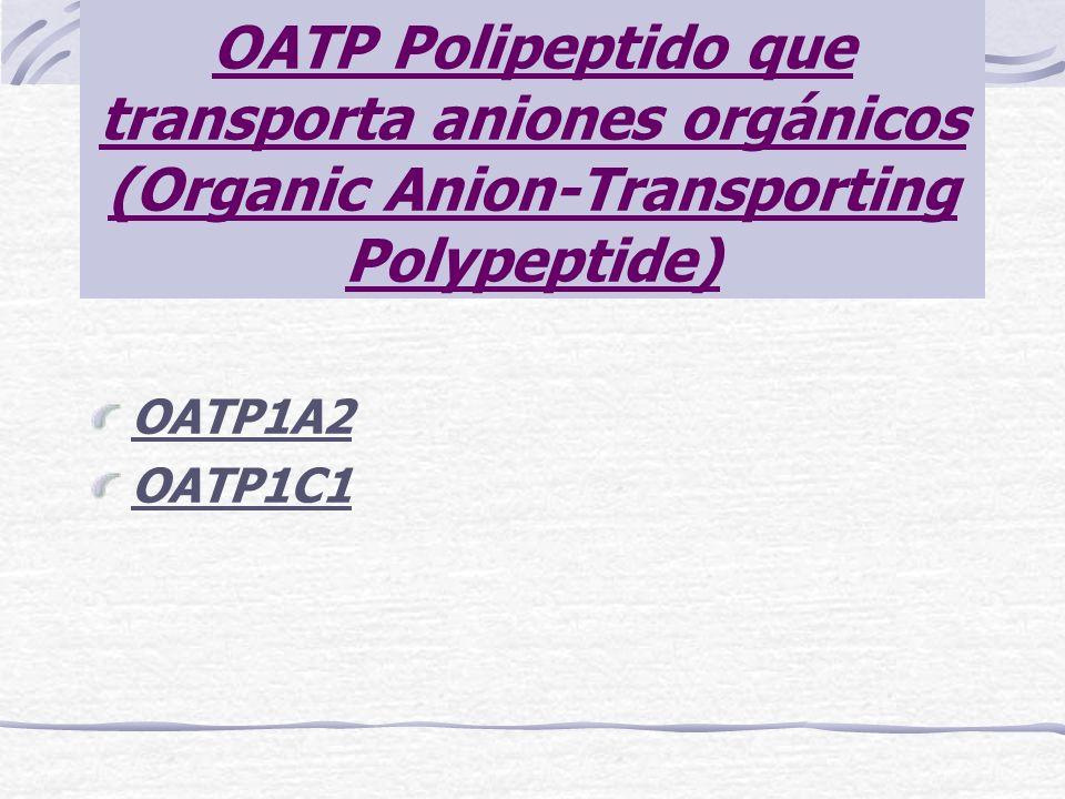 OATP Polipeptido que transporta aniones orgánicos (Organic Anion-Transporting Polypeptide) OATP1A2 OATP1C1