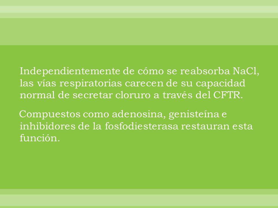 Independientemente de cómo se reabsorba NaCl, las vías respiratorias carecen de su capacidad normal de secretar cloruro a través del CFTR. Compuestos