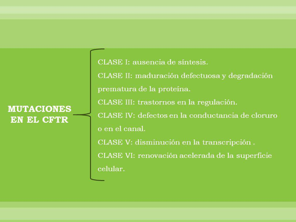 MUTACIONES EN EL CFTR CLASE I: ausencia de síntesis. CLASE II: maduración defectuosa y degradación prematura de la proteína. CLASE III: trastornos en