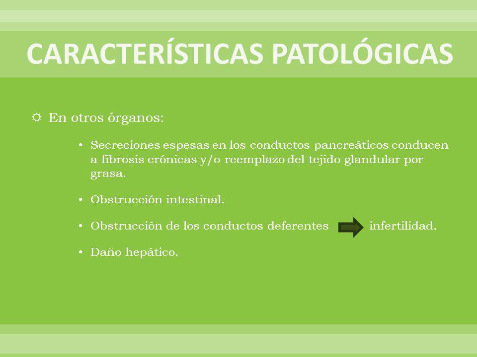 En otros órganos: Secreciones espesas en los conductos pancreáticos conducen a fibrosis crónicas y/o reemplazo del tejido glandular por grasa. Obstruc