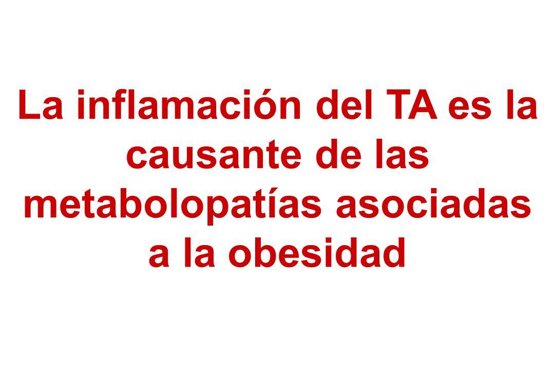 La inflamación del TA es la causante de las metabolopatías asociadas a la obesidad