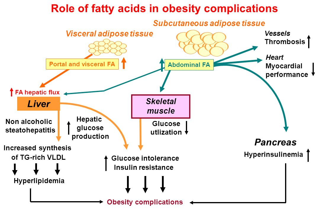 Obesity complications Increased synthesis of TG-rich VLDL Visceral adipose tissue Glucose intolerance Insulin resistance Hyperlipidemia Liver Hepatic