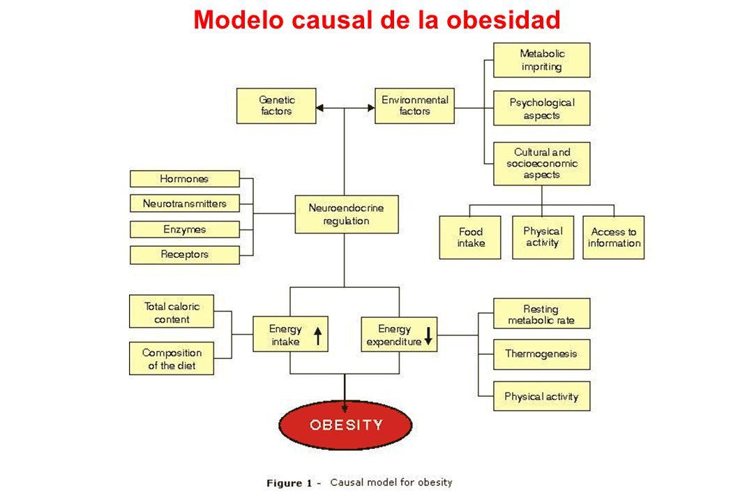Modelo causal de la obesidad