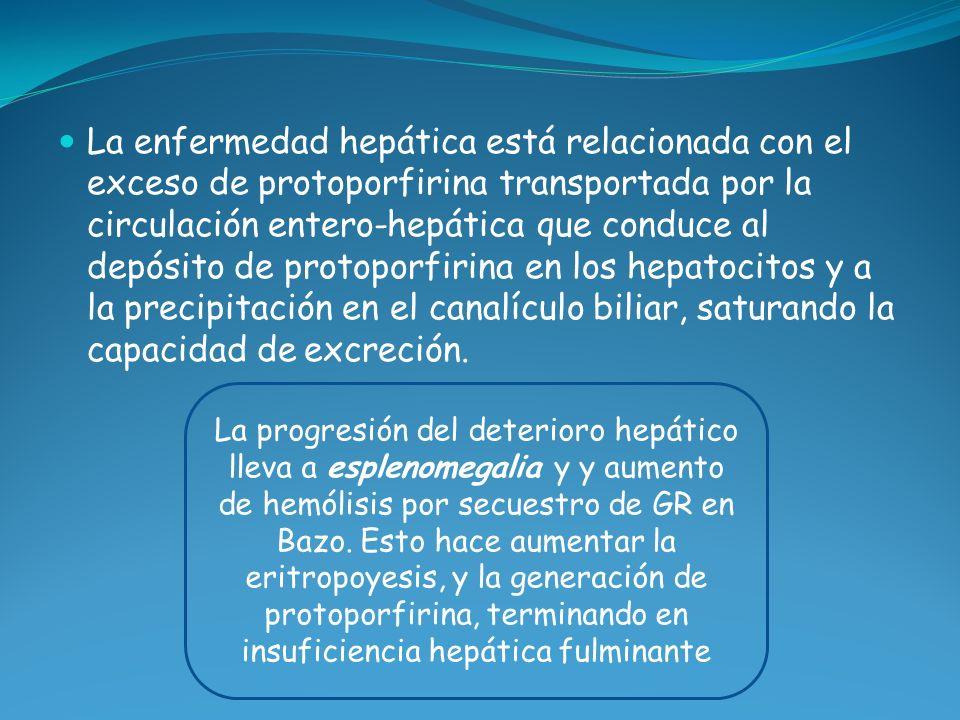La enfermedad hepática está relacionada con el exceso de protoporfirina transportada por la circulación entero-hepática que conduce al depósito de pro
