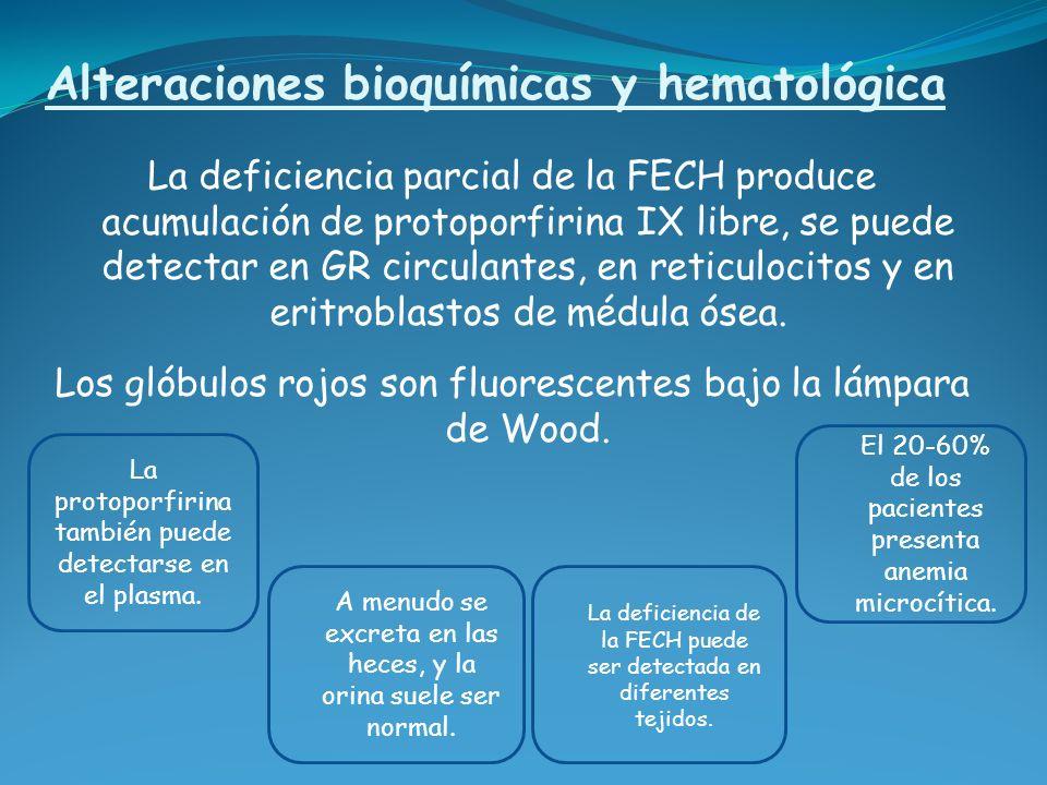 Alteraciones bioquímicas y hematológica La deficiencia parcial de la FECH produce acumulación de protoporfirina IX libre, se puede detectar en GR circ