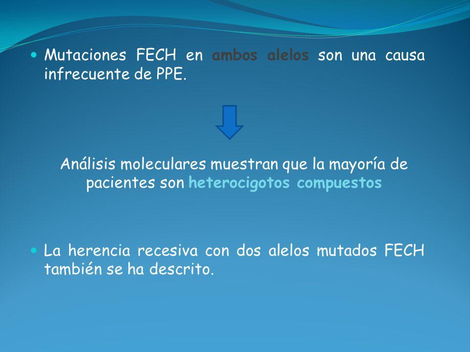 Mutaciones FECH en ambos alelos son una causa infrecuente de PPE. Análisis moleculares muestran que la mayoría de pacientes son heterocigotos compuest