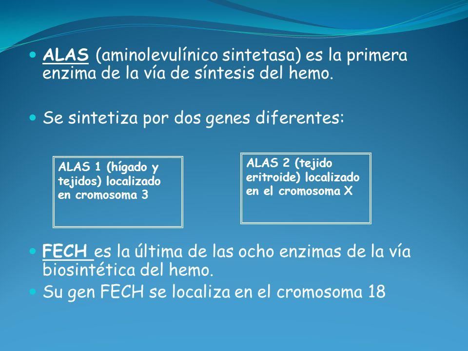 ALAS (aminolevulínico sintetasa) es la primera enzima de la vía de síntesis del hemo. Se sintetiza por dos genes diferentes: FECH es la última de las