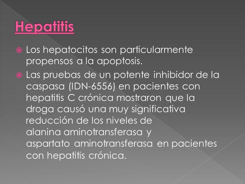 Los hepatocitos son particularmente propensos a la apoptosis. Las pruebas de un potente inhibidor de la caspasa (IDN-6556) en pacientes con hepatitis