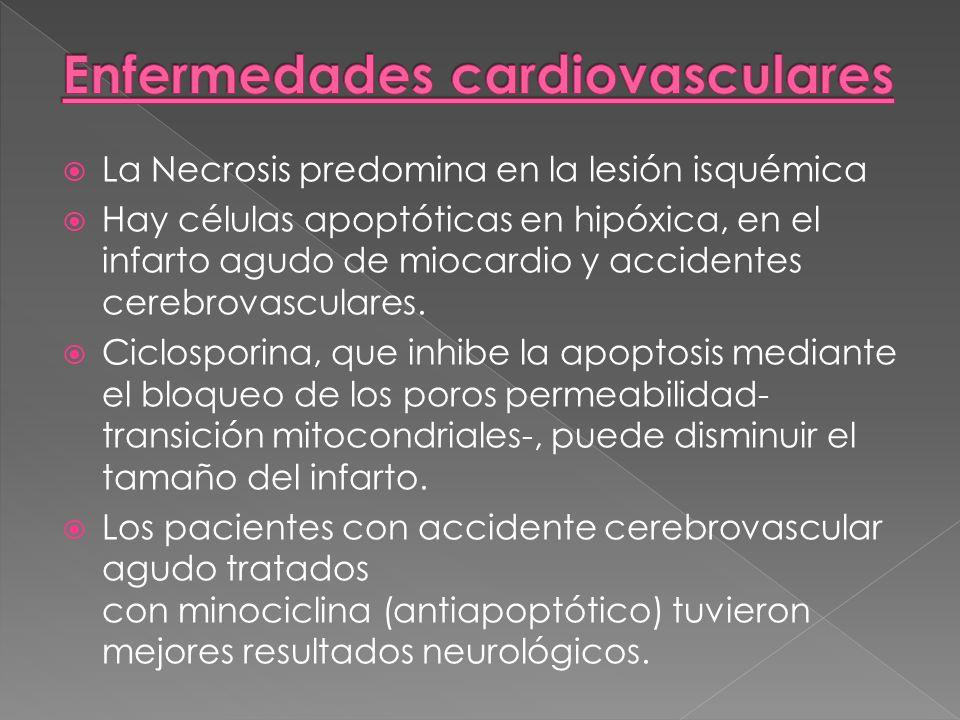La Necrosis predomina en la lesión isquémica Hay células apoptóticas en hipóxica, en el infarto agudo de miocardio y accidentes cerebrovasculares. Cic