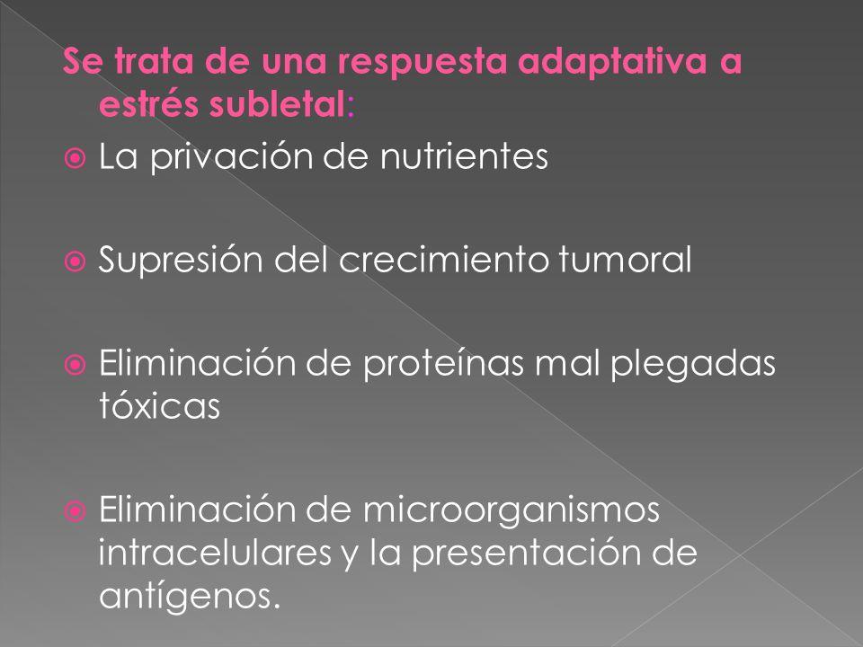 Se trata de una respuesta adaptativa a estrés subletal : La privación de nutrientes Supresión del crecimiento tumoral Eliminación de proteínas mal ple