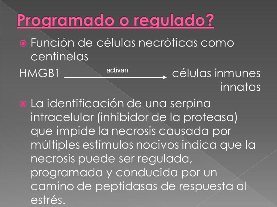 Función de células necróticas como centinelas HMGB1 células inmunes innatas La identificación de una serpina intracelular (inhibidor de la proteasa) q