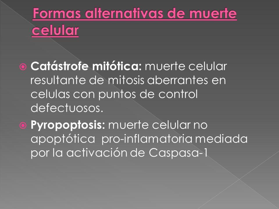 Catástrofe mitótica: muerte celular resultante de mitosis aberrantes en celulas con puntos de control defectuosos. Pyropoptosis: muerte celular no apo