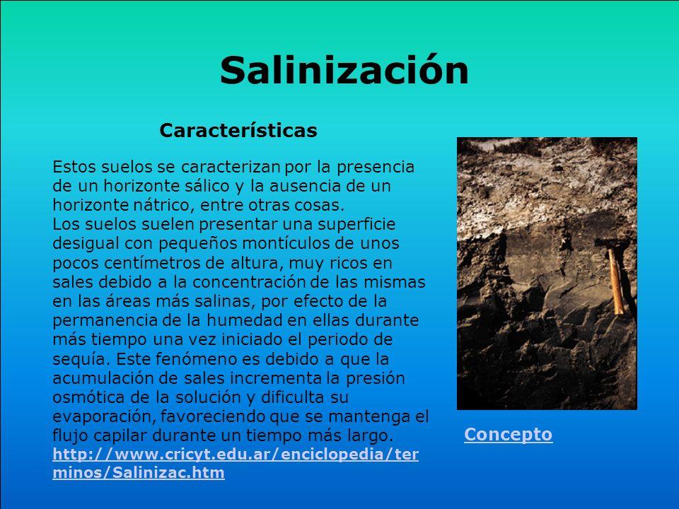 Salinización Estos suelos se caracterizan por la presencia de un horizonte sálico y la ausencia de un horizonte nátrico, entre otras cosas. Los suelos