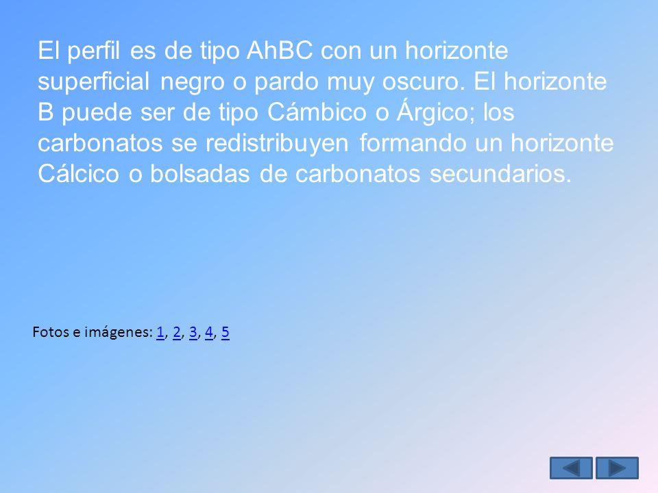El perfil es de tipo AhBC con un horizonte superficial negro o pardo muy oscuro.