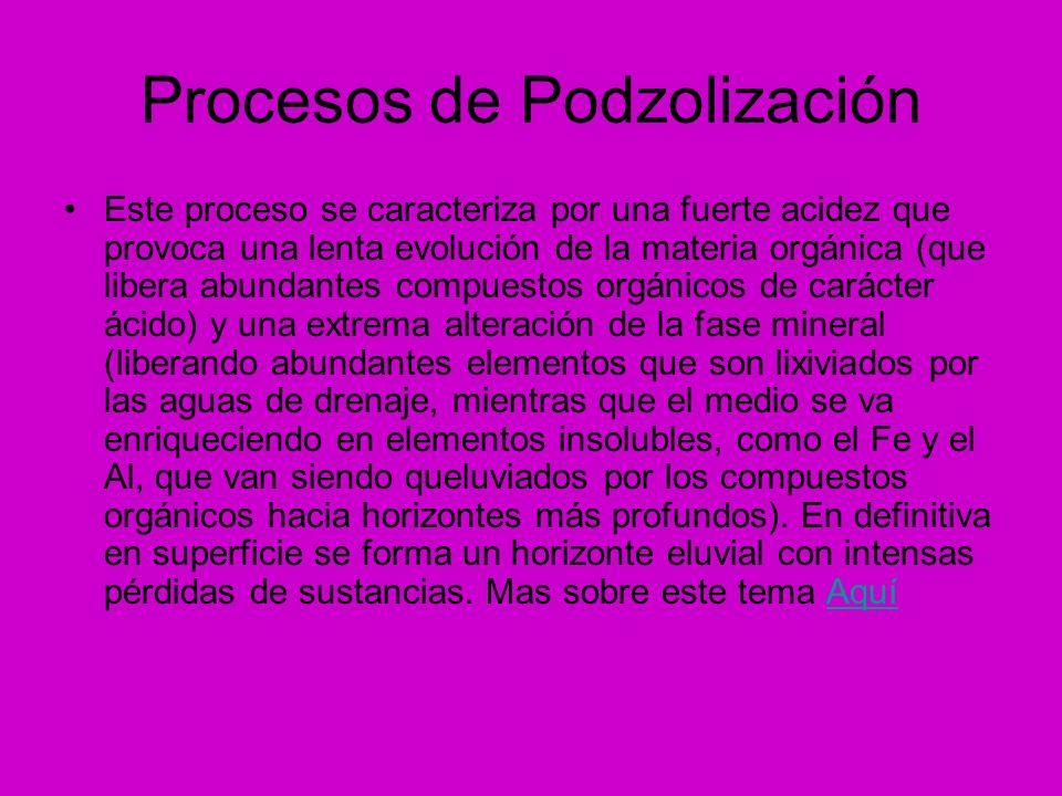 Procesos de Podzolización Este proceso se caracteriza por una fuerte acidez que provoca una lenta evolución de la materia orgánica (que libera abundan