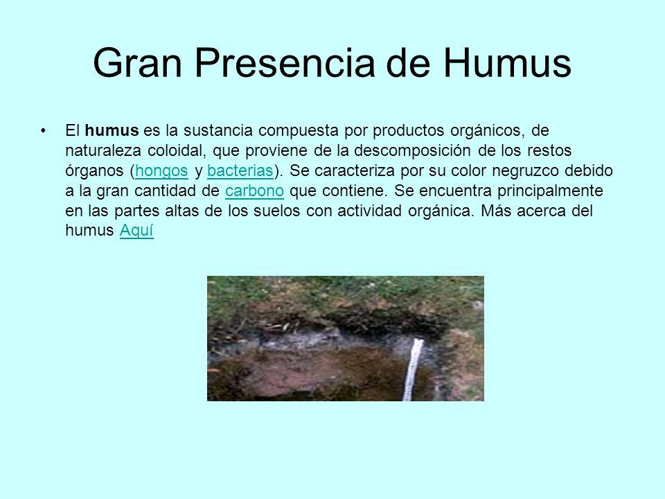 Gran Presencia de Humus El humus es la sustancia compuesta por productos orgánicos, de naturaleza coloidal, que proviene de la descomposición de los r
